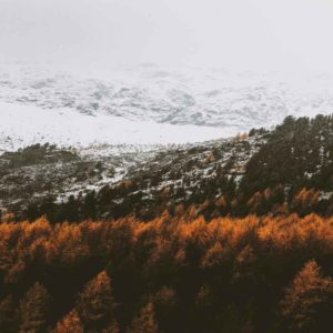 brown-trees-on-mountains-1699032