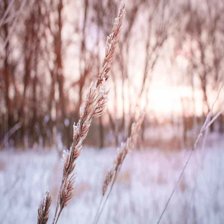 shallow-focus-photography-of-plant-during-winter-1200499