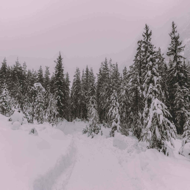 snow-covered-trees-1297692
