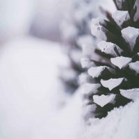 close-up-photography-of-snow-covered-pine-cone-1647254